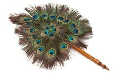 羽毛孔雀改变方向 免版税库存照片