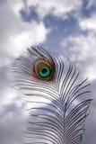 羽毛孔雀 库存照片