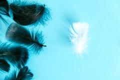 羽毛抽象背景 设计的背景与软的colorfull用羽毛装饰样式 在绿松石,天d的软的蓬松羽毛 库存图片