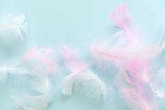 羽毛抽象背景 设计的背景与软的colorfull用羽毛装饰样式 软的蓬松羽毛 免版税库存照片