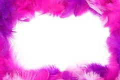 羽毛框架 库存照片