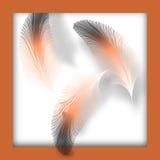 羽毛框架 免版税库存照片