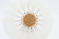 羽毛球的白色Shuttlecock 免版税图库摄影