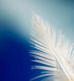 羽毛白色 库存照片