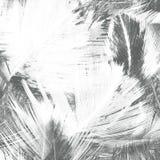 从羽毛的抽象创造性的背景 免版税库存照片