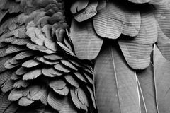 黑羽毛的背景样式 免版税库存图片