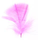羽毛粉红色 库存图片