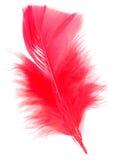 羽毛红色 图库摄影
