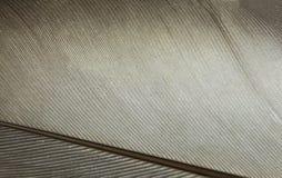 羽毛纹理/高分辨率宏观照片 免版税图库摄影