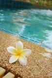 羽毛花和蓝色游泳池起了波纹水细节 免版税库存图片