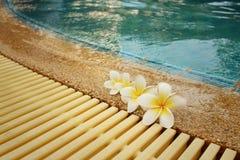羽毛花和蓝色游泳池起了波纹水细节 库存图片