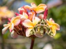 羽毛花在庭院里 免版税图库摄影