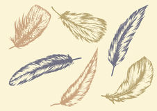 羽毛设置了手拉的传染媒介 库存图片