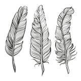 羽毛设置了手拉的传染媒介llustration 库存照片