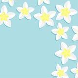 羽毛赤素馨花热带花象集合 夏威夷,巴厘岛植物花框架角落 背景看板卡祝贺邀请 平的设计 免版税库存图片