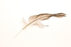 羽毛迷路者 库存照片