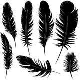 羽毛集合传染媒介例证剪影 免版税库存照片