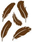 羽毛集 库存图片