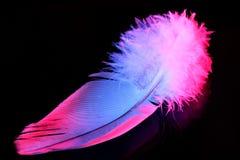 羽毛鸟颜色,在黑背景隔绝的特写镜头,轻和通风 笔是轻量级材料,允许鸟飞行 库存照片