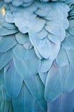羽毛鹦鹉s 库存照片