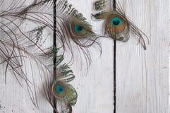 羽毛,美丽,孔雀,孔雀用羽毛装饰,背景,白色背景,木背景 免版税库存图片