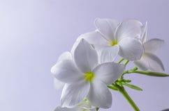 羽毛,自然,俏丽的芳香,芳香疗法,美丽,秀丽 库存图片