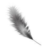 羽毛黑白颜色 查出的向量例证 免版税图库摄影