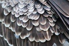 羽毛 免版税库存照片