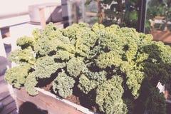 羽衣甘蓝植物在屋顶庭院里 免版税库存照片