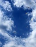 滑翔伞在天空中 免版税库存照片