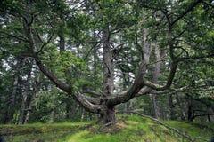 翘曲的结构树 图库摄影