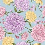 翠菊花开花样式 向量例证