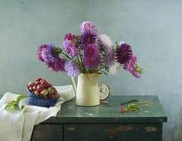 翠菊花束 库存图片
