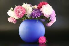 翠菊蓝色黑暗的花瓶 库存图片