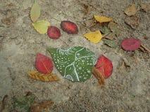 翠菊许多秋天的紫红色心情粉红色 库存照片