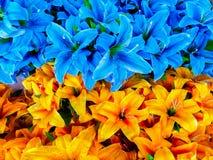 翠菊,花,秋天,头状花序,花圃 免版税库存图片