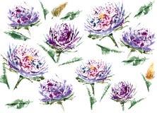 翠菊水彩花卉无缝的样式 库存图片