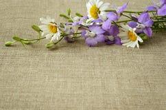 翠雀和雏菊在帆布 库存图片