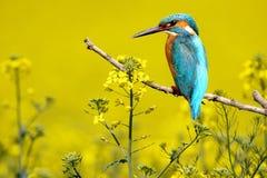 翠鸟异常和异乎寻常的拼贴画  免版税图库摄影