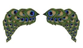 翼在白色背景的孔雀羽毛 免版税库存照片