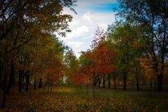 翼果的秋天俄国公园 库存图片