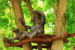 翼果,俄罗斯- 2016年8月04日 强盗在树掩藏 库存照片