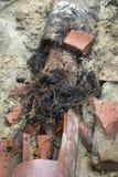 老下水道线入侵的树根完全地充分关闭 库存照片