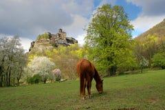 老中世纪城堡StÅ™ekov 图库摄影