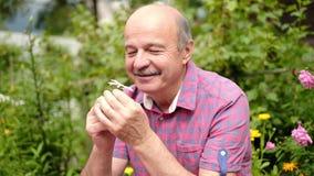 老人嗅ewsting在庭院里的白色春黄菊花在暑假时 影视素材