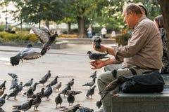 老人坐长凳哺养的城市鸽子 免版税库存图片