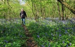 老人愉快走在会开蓝色钟形花的草木头 免版税图库摄影