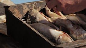 老人手的抽烟或烤的准备鱼 烹调在室外的吸烟房的鲭鱼 股票视频