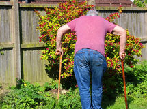 老人拐杖或藤茎 关节x线照片 图库摄影