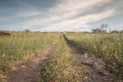 老供徒步旅行的小道戈兰高地风景以色列 免版税库存照片